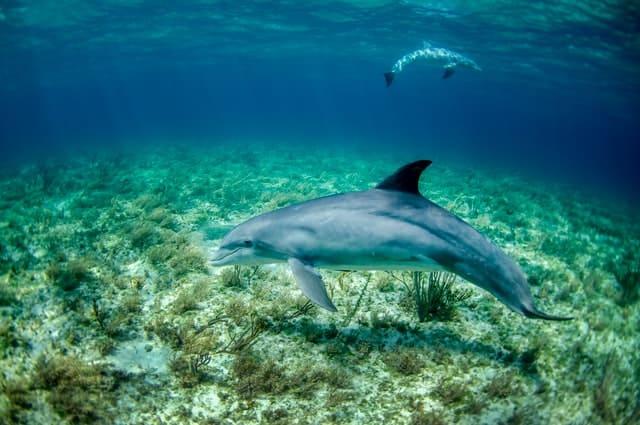 حيوانات الدولفين اللطيفة