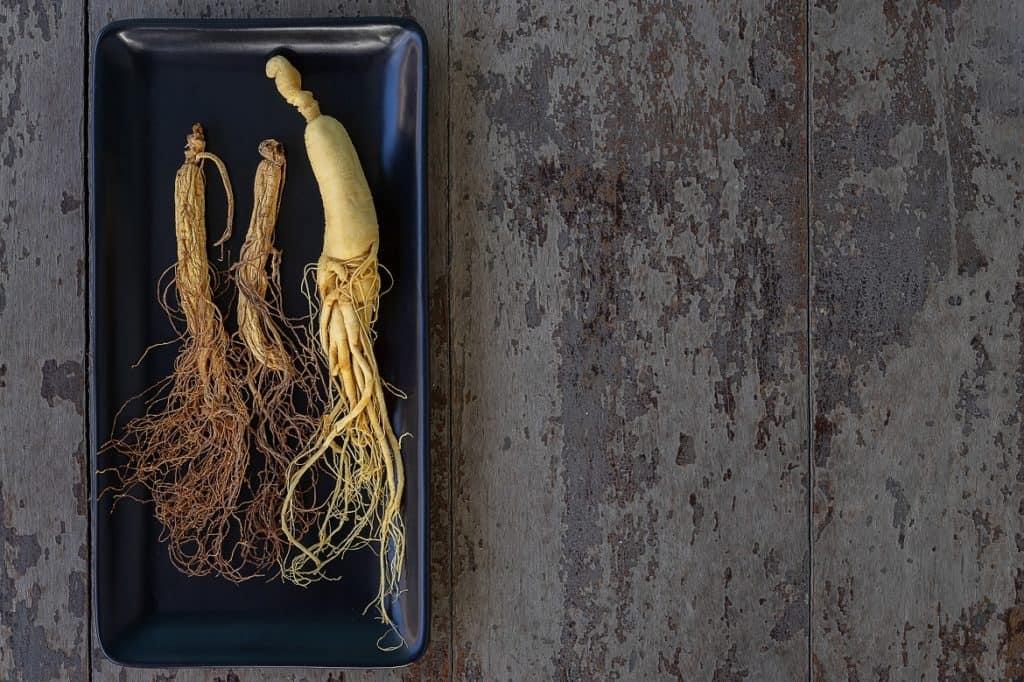 نبات الجينسنغ