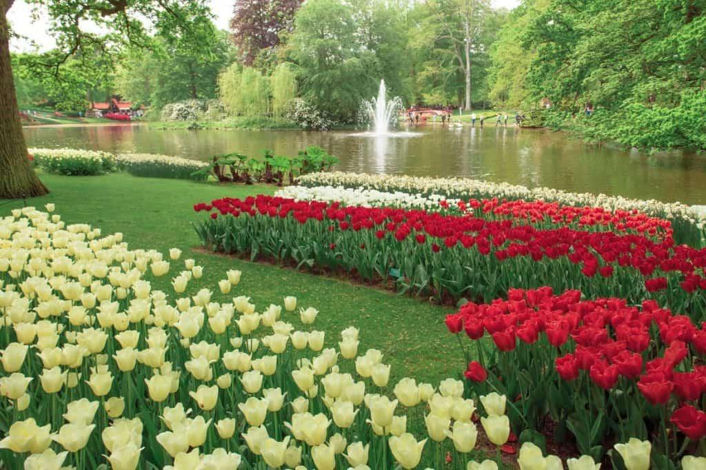 حديقة كوكينهوف في أمستردام